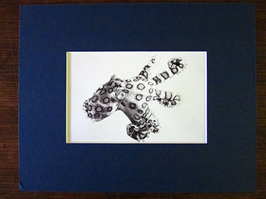 Print of Blue Spotted Octopus