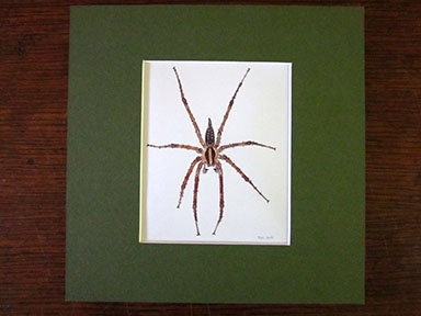Print of Grass Spider