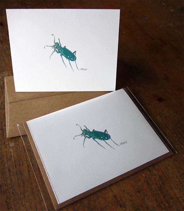 Summer card I: Tiger beetle