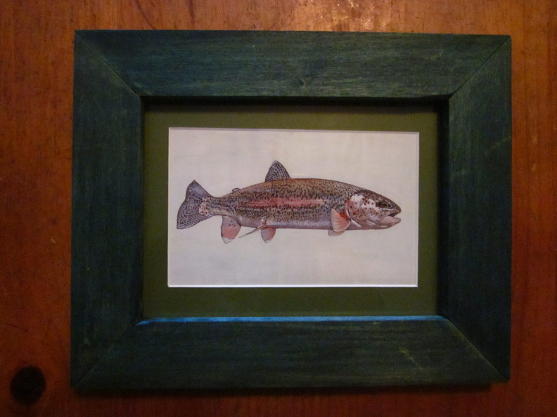 Framed print of Rainbow trout